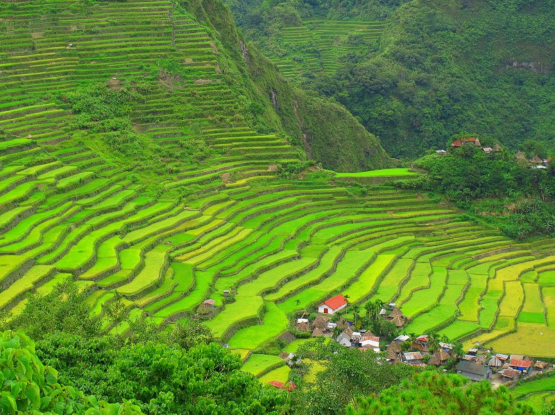 Batad Rice Terraces of the Philippines, Inspiration for Terraced Rock Walls