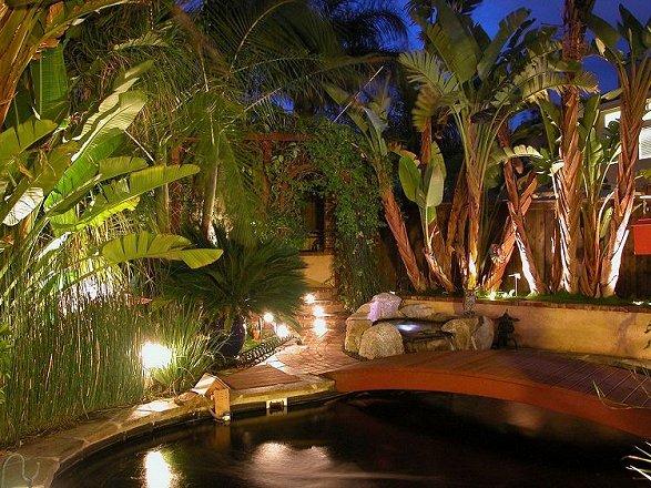 Eric Newman's Backyard Koi Pond Pages
