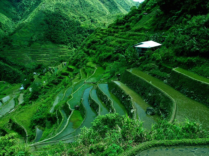 Rice Terraces of the Philippine Cordilleras, Inspiration for Terraced Rock Walls