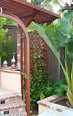 Rear Right Arbor with Grape Ivy